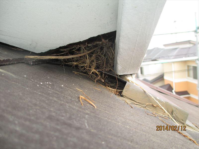 軒天欠損部に鳥の巣