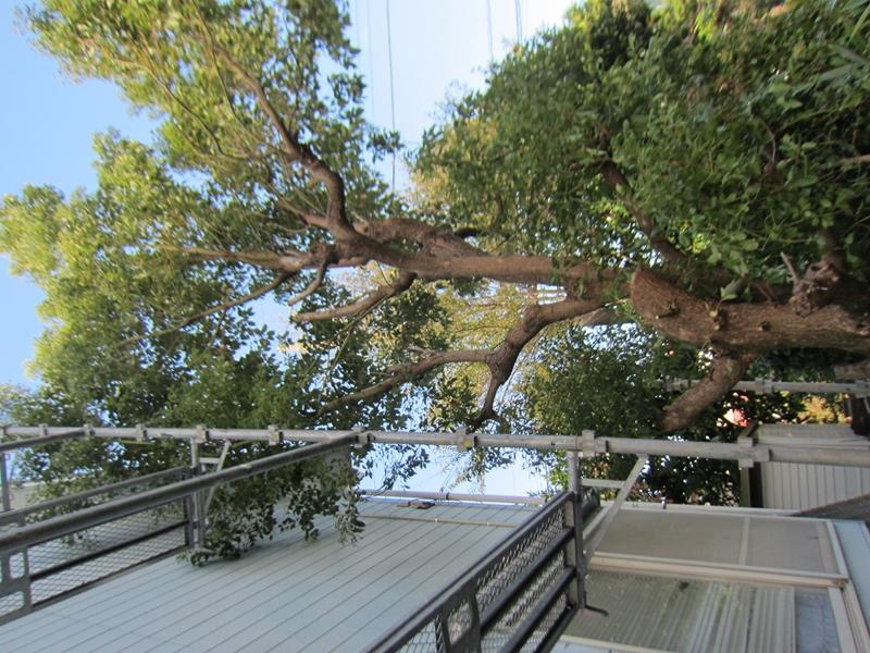 足場にぶつかる木をカット