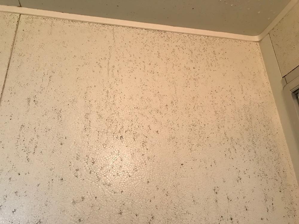 劣化した浴室壁・天井アップ