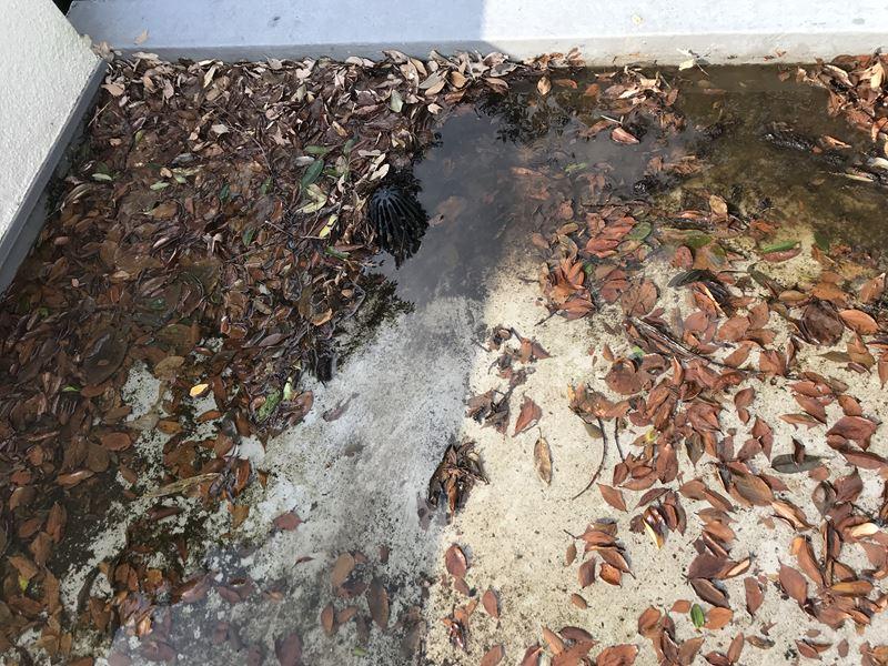 排水口付近の状態