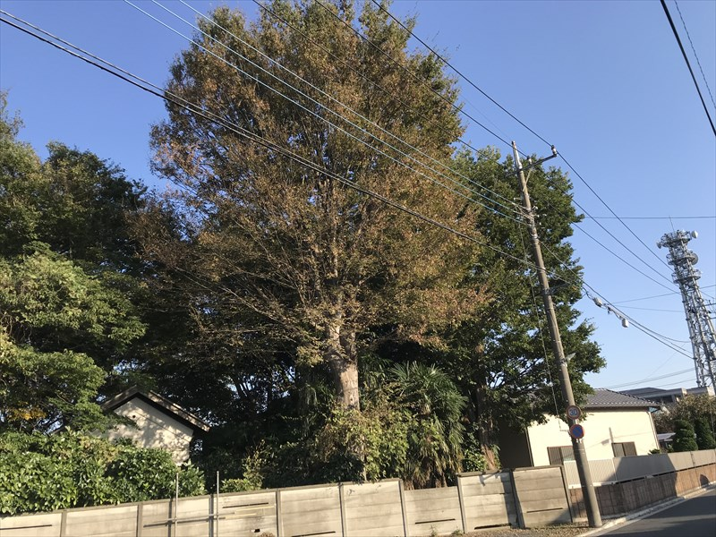 さいたま市北区大きくなりすぎた敷地内の高木