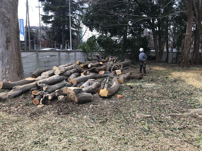 太い材木撤去前