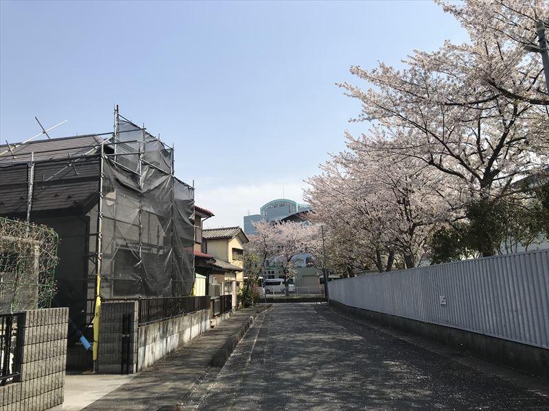 伊奈町の屋根外壁塗装工事現場と桜並木